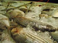 seafoodcity3.jpg